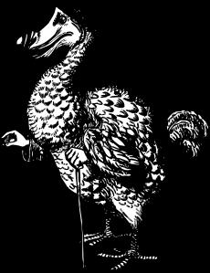 dodo trasnparent